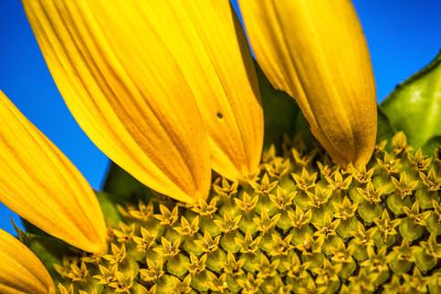 Sunflower Morning-58-Edit-Edit-2.jpg