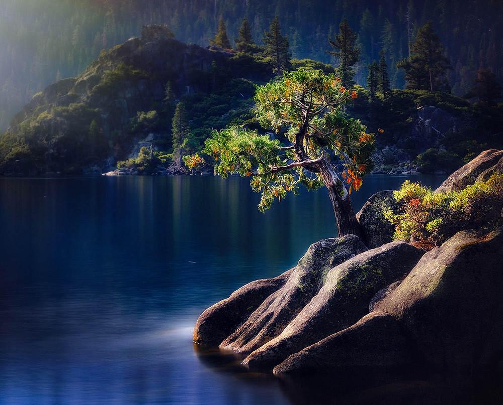 Photo tree growing rocks water