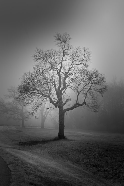 Fogged Tree