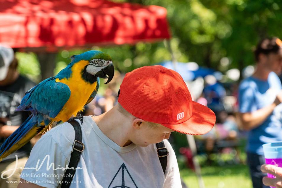 City Wide Fair Tower Grove Park 2019 144