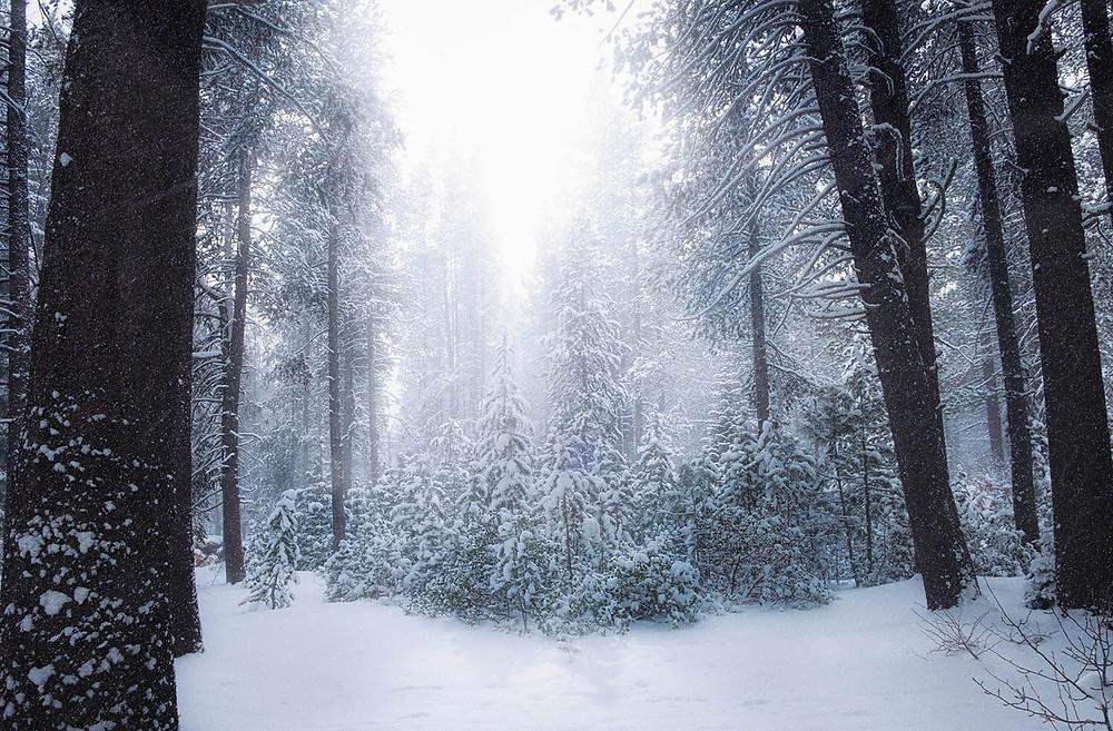 photo trees snow
