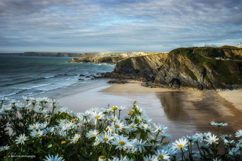 Newquay Beach with Flowers