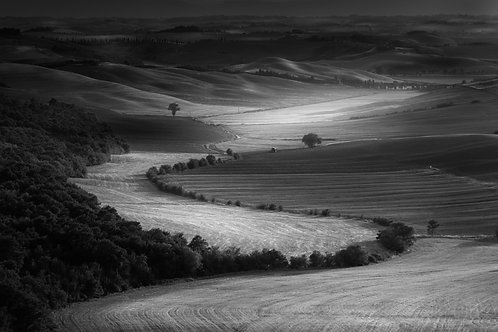 Into the Tuscan Fields