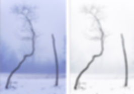 Tree reprocessed.jpg