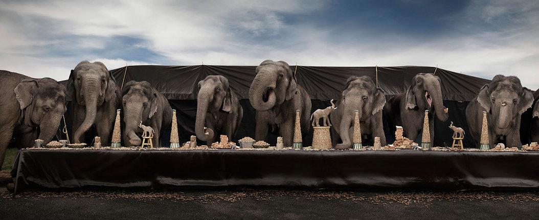 Elephant Feast.jpeg