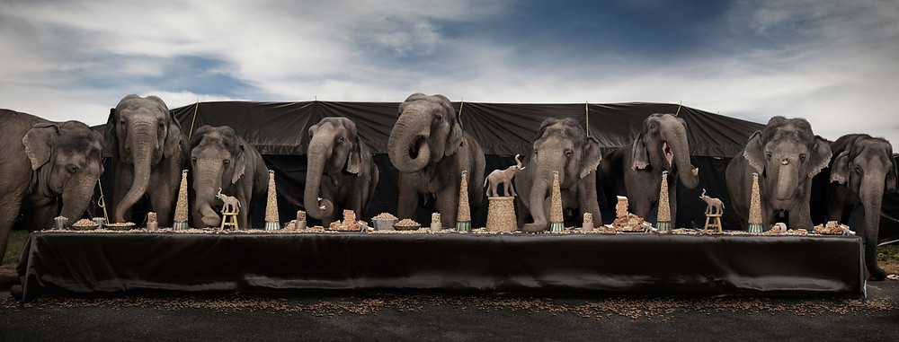 Photo elephants dinner table