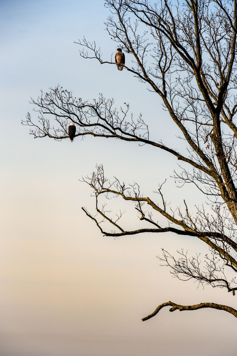 Eagle and Friend