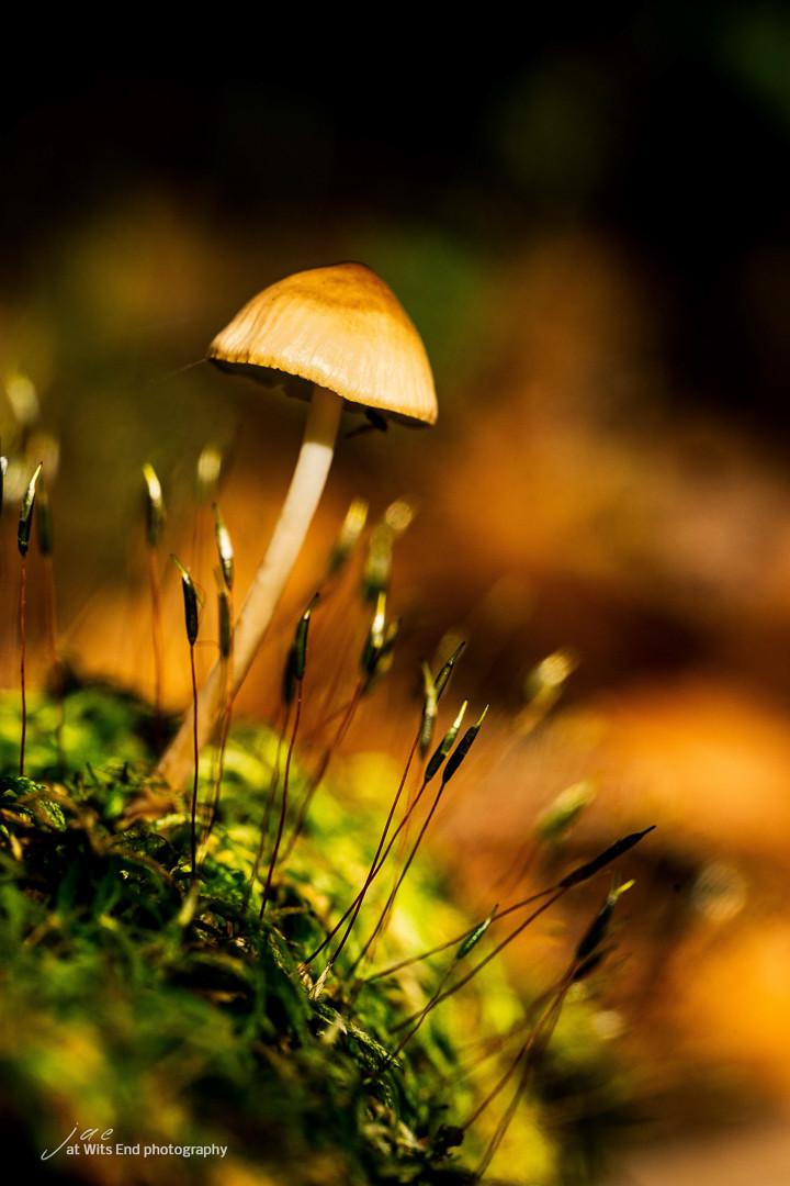 Macro photo mushroom