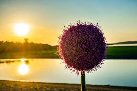 This Thistle