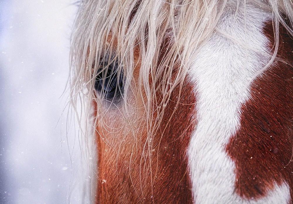 Horse photo closeup