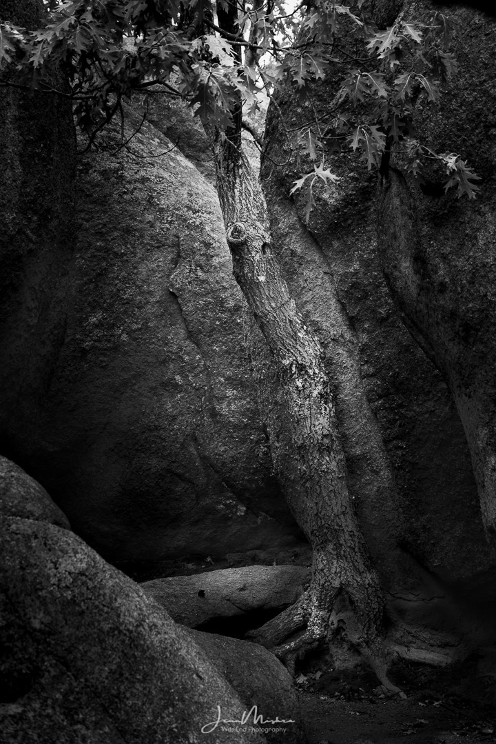 Black and white nature photo tree rocks