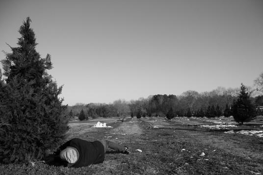 tree farm 2017