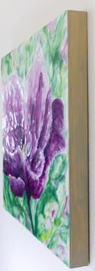 Crystal Hermitage Tulip