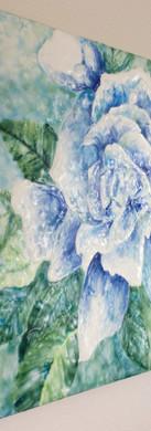 Ocean Gardenia