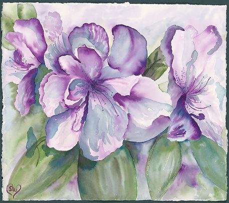 Purple-Azalea.jpg
