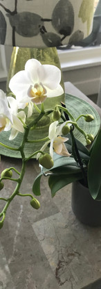 White Orchid Photo.jpg