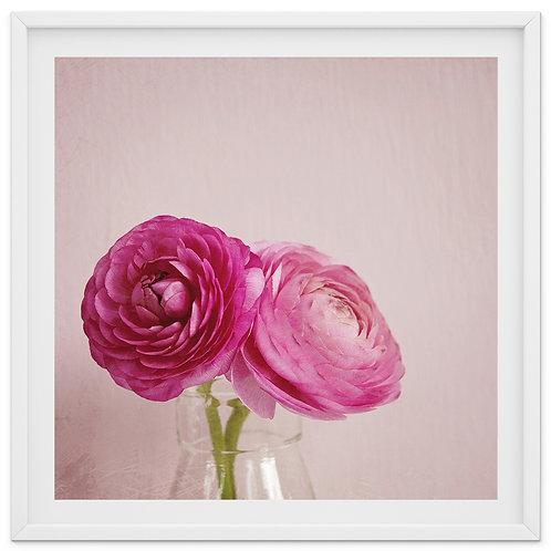 Dainty Pink