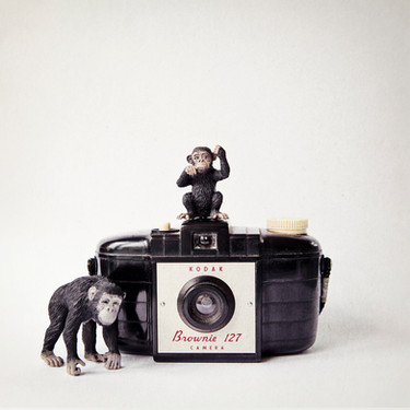 The Monkies and the Kodak