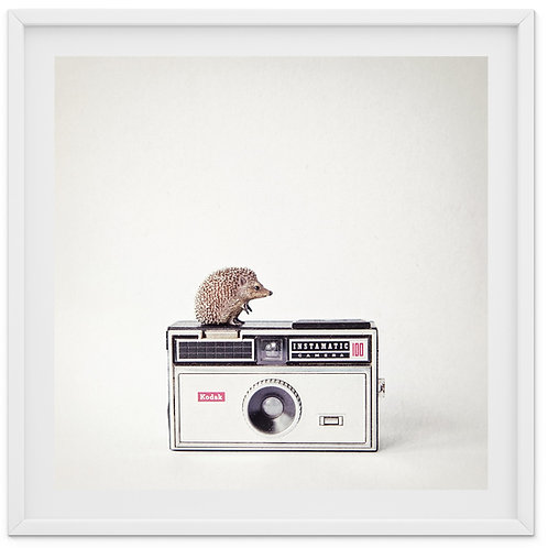 The Hedgehog and The Instamatic