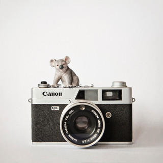 The Koala and the Canon
