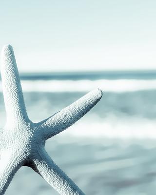 The Starfish - beach print