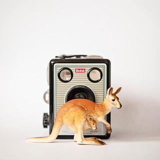The Kangaroo and the Brownie