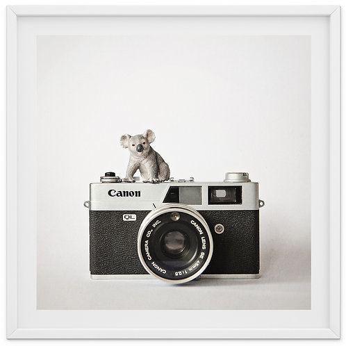 The Koala and The Canon