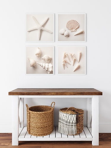 The Pale Shell Collection -  set of 4 photo prints, canvas wraps or wood blo