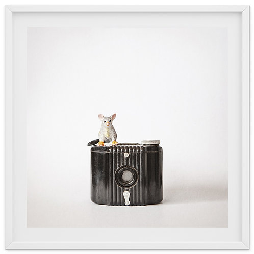The Possum and the Mini Kodak