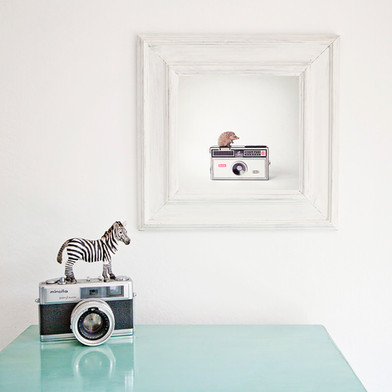 The Hedgehog and the Instamatic print