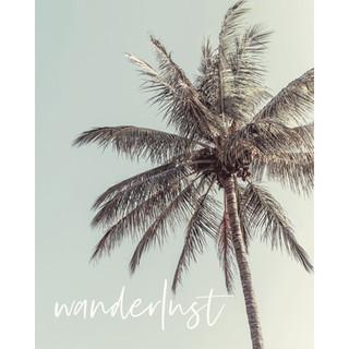 'Wanderlust' (palms)