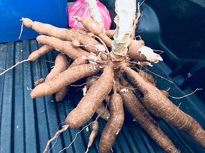cassav