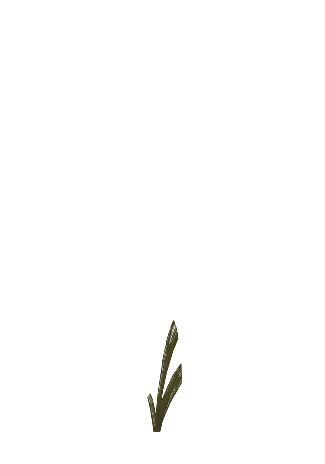 Plant_SmB2.PNG