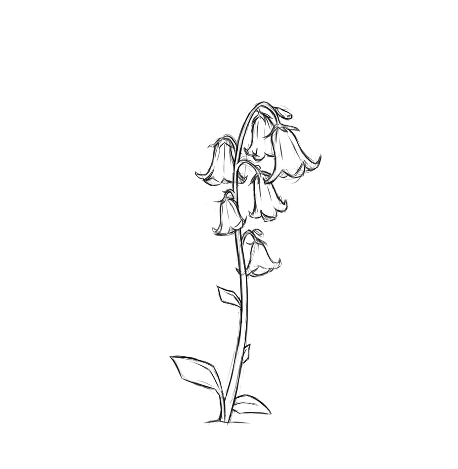 Flower_BluebellA.png