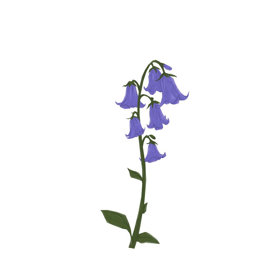 Flower_BluebellA2.PNG