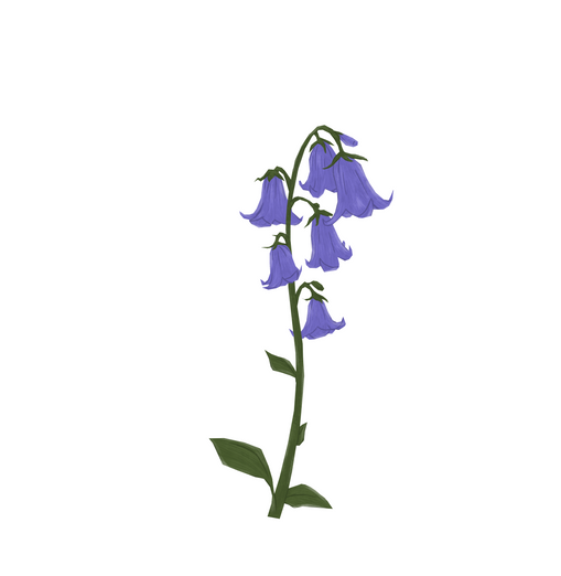 Flower_BluebellA2.PNG