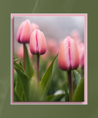 Frozen Tulip_Framed.jpg