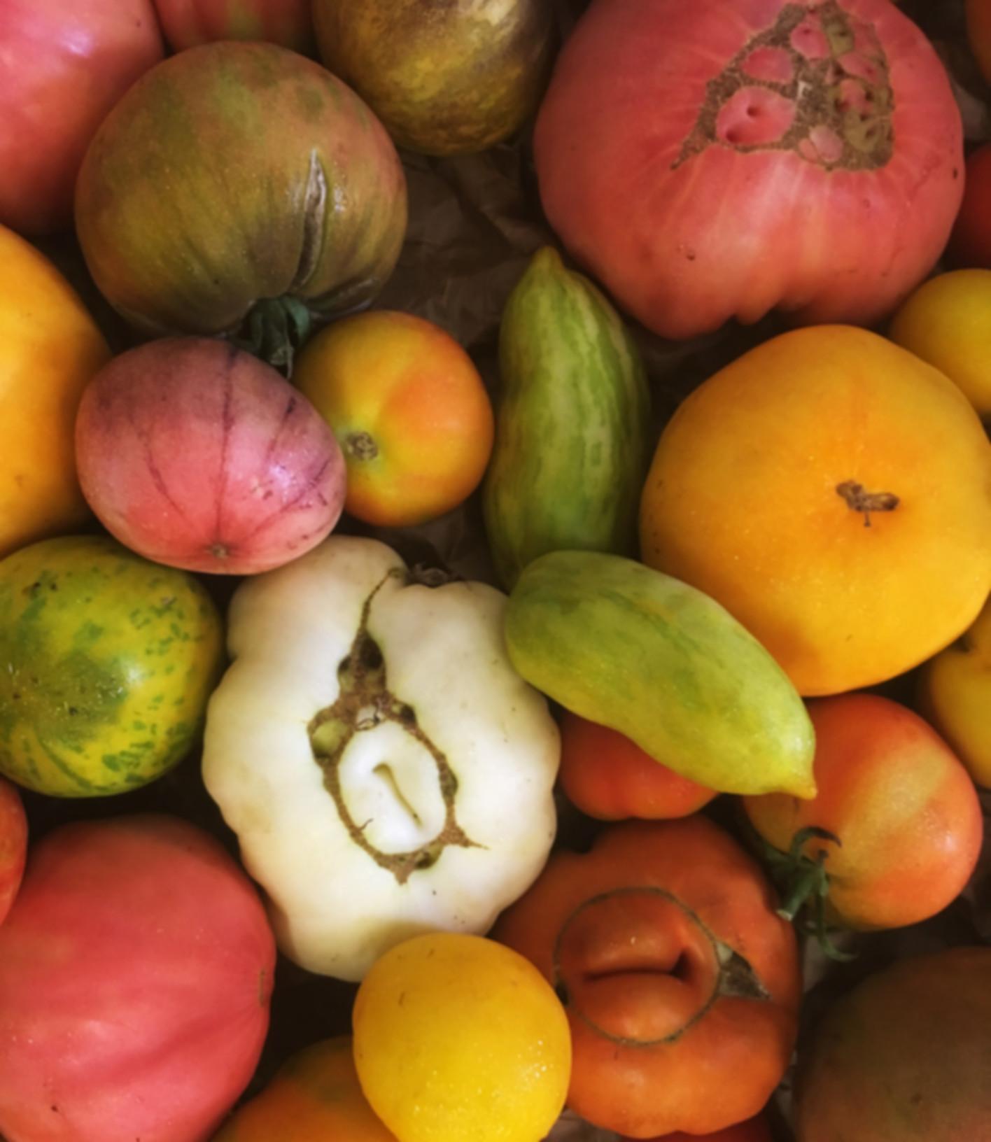Tomaten1.jpg
