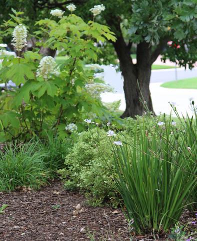 cropped plants.jpg