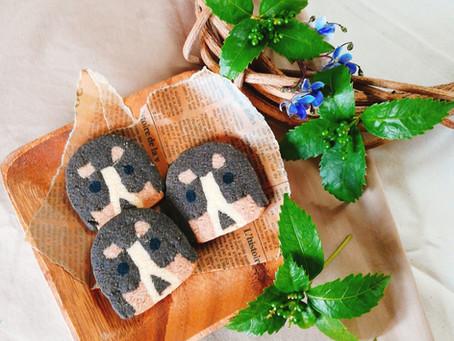 バーニーマウンテンドックのくむクッキー