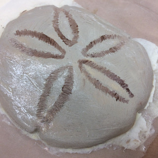 Molded sand dollars provided by the wig and makeup department to be painted with contrasting browns.