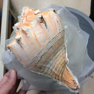 Seashell that was molded and shaped, provided to the craft shop by the wig and makeup department.  I used a real shell in order to create the textures and aging on the molded shell.
