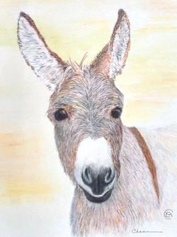 Gary's Donkey