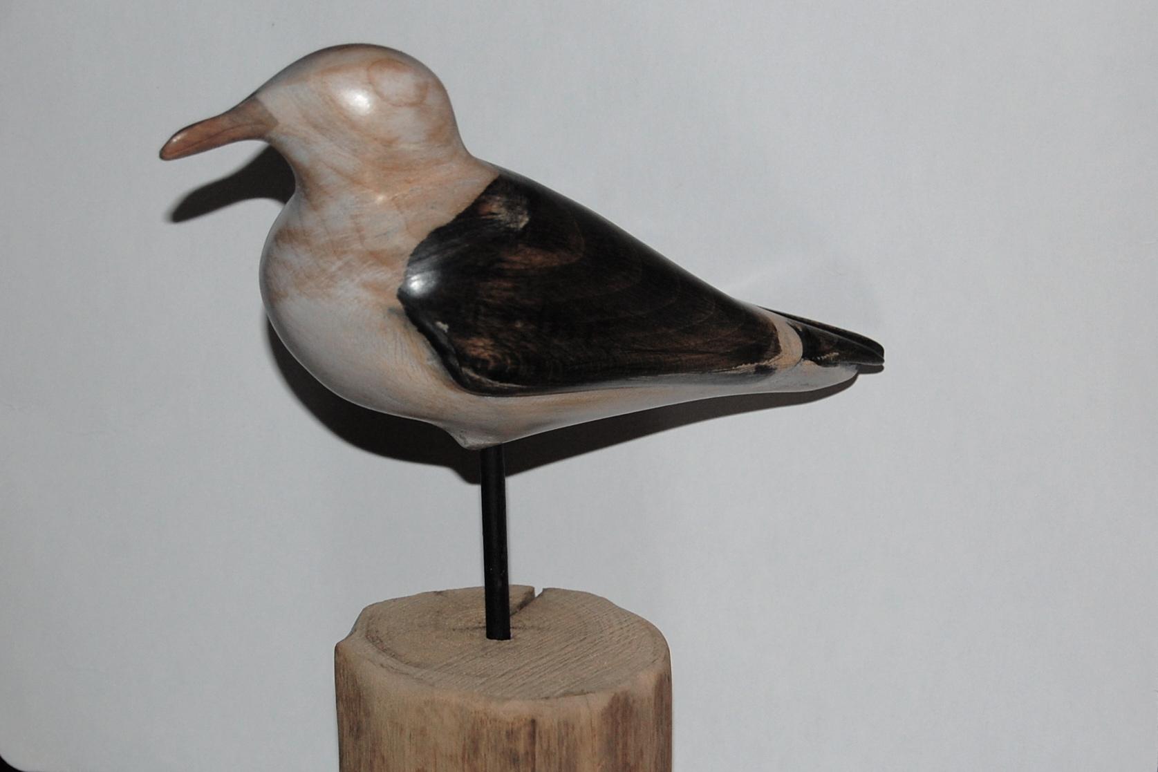 First Gull