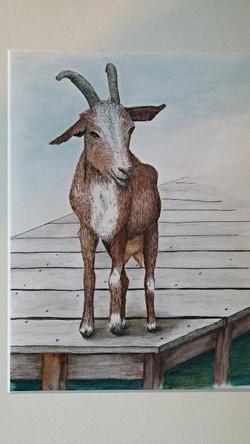 Goat on the Dock-$200 unframed