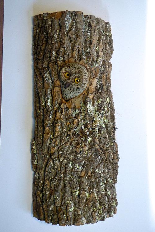 Owl Dreaming