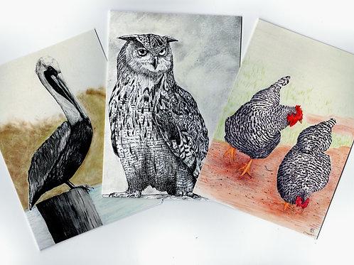 Set of three Bird Notecards