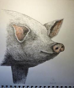Some Pig -nfs