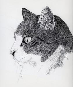 Leila's cat