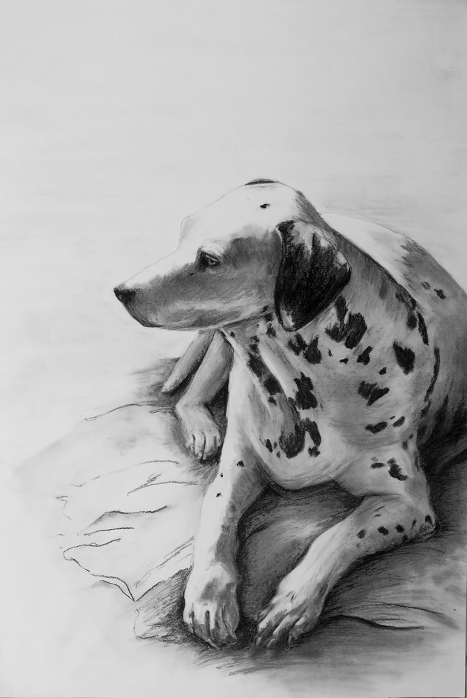Unframed Show in August at Little Dog Coffee Shop